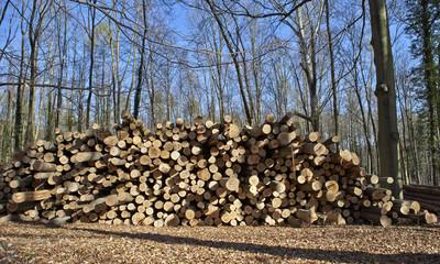gefällte Bäume im Wald