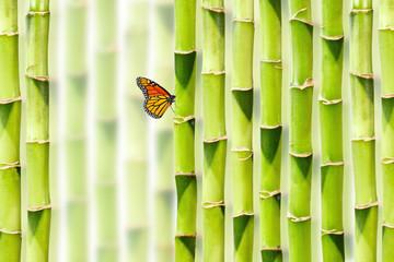 Asiatischer Bambus Hintergrund mit Schmetterling