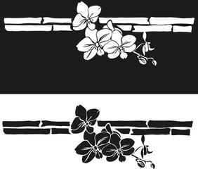орхидеи рисунок
