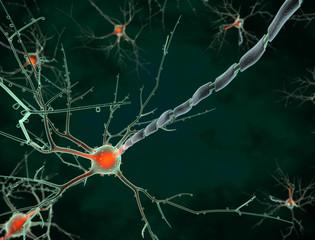 Cell body of a neuron long shot
