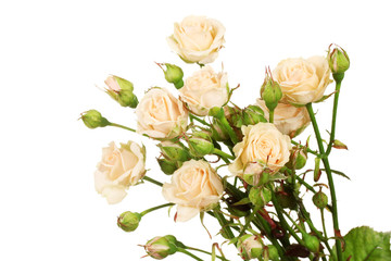 Small roses isolated on white