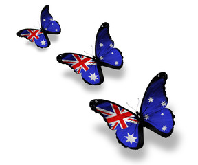 Three Australian flag butterflies, isolated on white