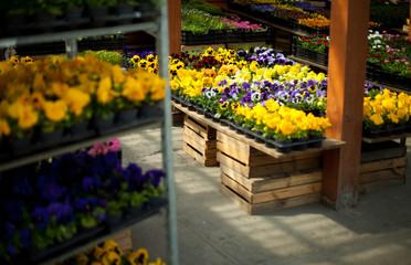 Fototapeta kwiaciarnia sklep ogrodniczy ogród ogrodnik sadzonki obraz