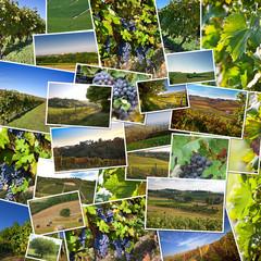 Collage of photos of Astigiano, Piedmont, Italy.