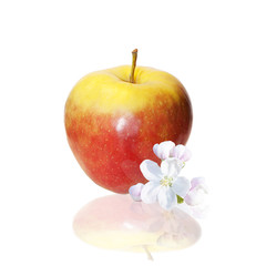 The red apple and flowers over white background