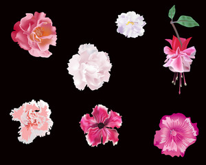 set of pink flowers isolated on black
