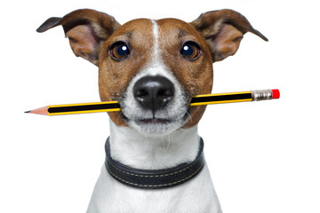 dog with pencil and eraser Fotomurales