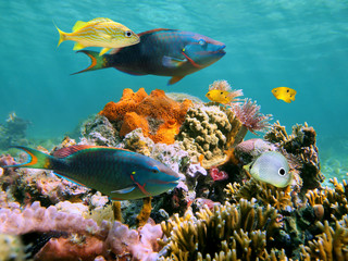 Fototapeten Riff Colorful tropical fish and marine life in a coral reef, Caribbean sea