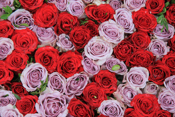 lilac and red roses in a group