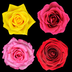Four Perfect Rose Flower Isolated on Black