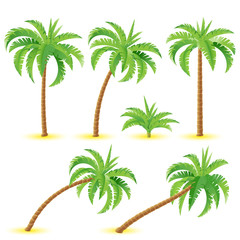 Coconut palms
