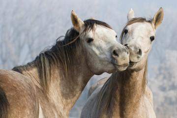 Funny horses