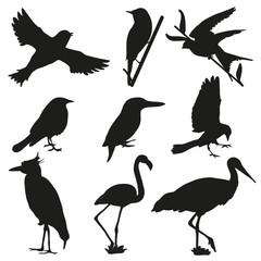 Black bird silhouettes