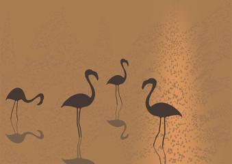 Flamingo on sunset