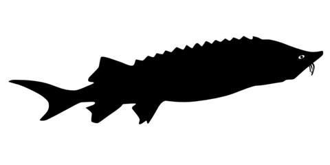 vector beluga