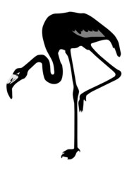 Vector silhouette of a flamingo