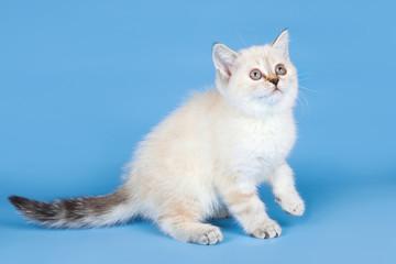 Little kitty on blue background