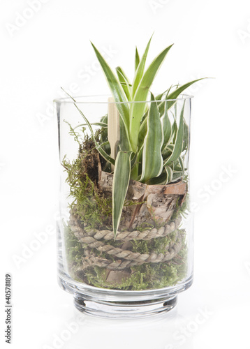 D coration plante verte dans bocal en verre photo libre de droits - Decoration bocal en verre ...
