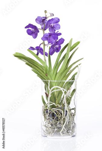 quot orchid 233 e vanda dans pot en verre cylindrique quot photo libre de droits sur la banque d images