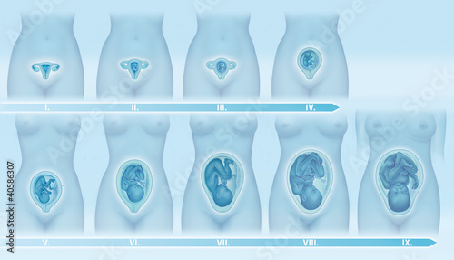 schwangerschaft 1 bis 9 monat stockfotos und lizenzfreie bilder auf bild 40586307. Black Bedroom Furniture Sets. Home Design Ideas