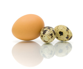 chicken and quail eggs on a white background