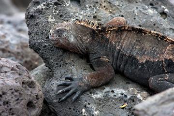 Galapagos 11