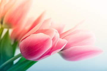 Wall Mural - Spring Tulips