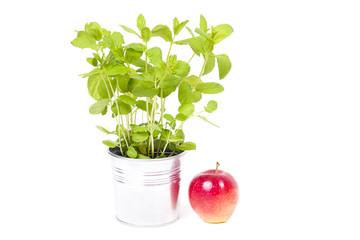 Fototapeta The mint and the apple obraz