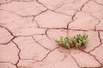 Dry cracked earth with plant struggling for life