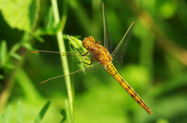 Photos illustrations et vid os de insectes volants - Insecte vert volant ...