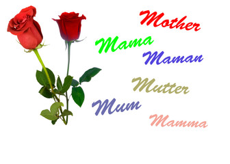 birthday and mother's day card, isolated
