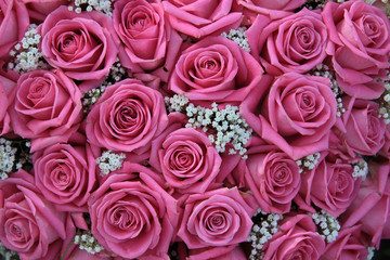 pink roses and white gypsophila