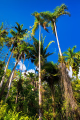 Tropical forest in Cuba