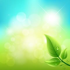 Green leaf natural background. vector