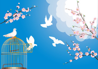 free doves and cherry tree flowers
