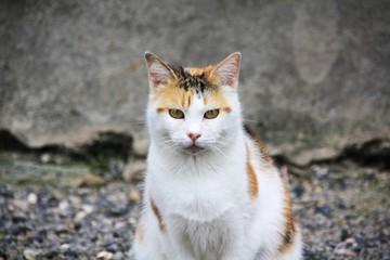 Chat dans le rue pose
