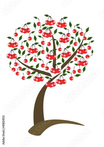 Albero di ciliegio immagini e fotografie royalty free su for Albero ciliegio