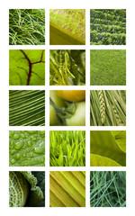 Wall Mural - Texture, matière, fond, nature, jardin, vert, végétation