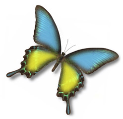 Ukrainian flag on butterfly