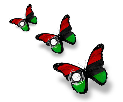 Three Malawi flag butterflies, isolated on white
