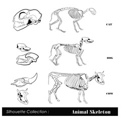 Vector illustration .Animal skeleton