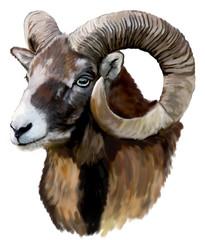 Mouflon head on a white background