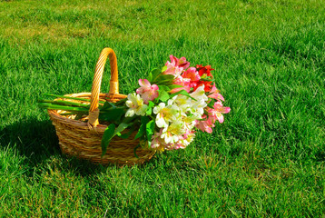 Fotobehang beautiful alstroemeria flowers in basket on green grass