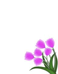 Tulip bouquet background