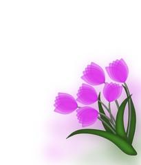 Purple tulip bouquet on colored background