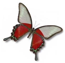 Poland flag on butterfly