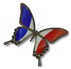 France flag on butterfly
