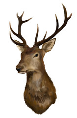 Deer head on a white background