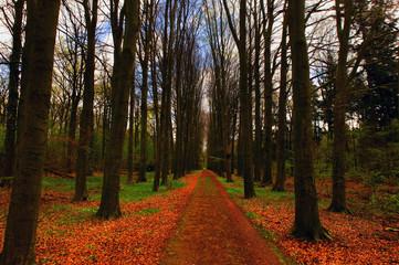 Morning Autumn woods