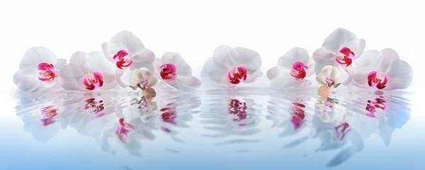 Foto auf Acrylglas Orchideen Orchideen im Wasser